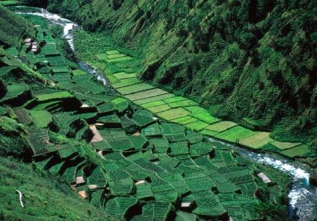 Philippines_Baguio_rice_ter.jpg