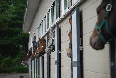 9・移動・見送る馬たち