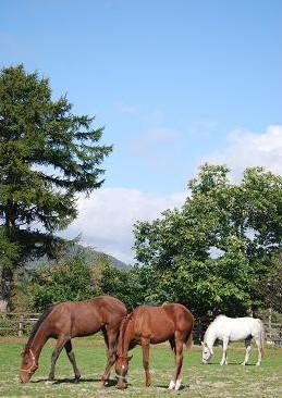 10・当歳・プリ&キセキと乗馬