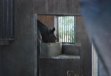 10・タキ・準備馬房