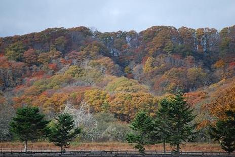 11・紅葉・放牧地から見る山