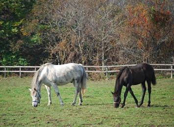 11・続き・乗馬とエルシド