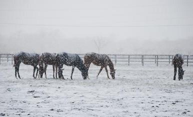 12・雪・牝馬