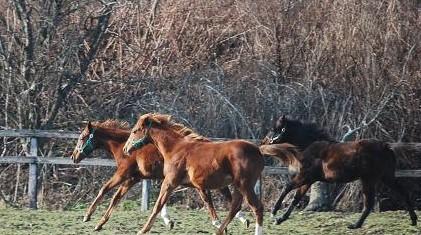 12・行く・駆ける牝馬
