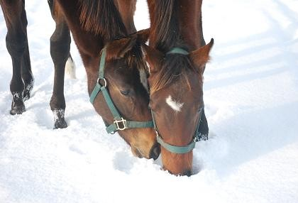12・雪の中・タキ&ディープ