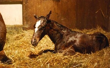 2・誕生・ディープ牝誕生