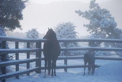 3・雪・朝もや
