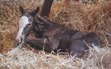 3・出産・アリュール牝