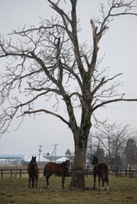 4・キセキ・大樹