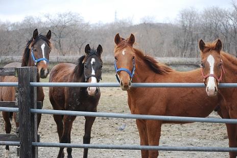 4・キセキ・新たな牡馬4頭