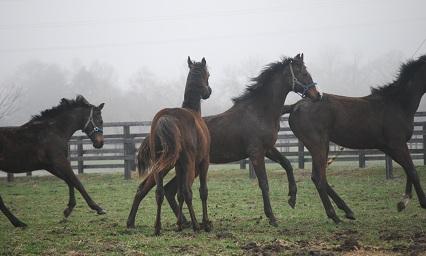 4・霧・牡馬4頭