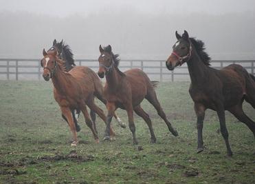 4・霧・牝馬駆ける