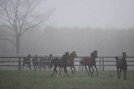 4・霧・みんなで