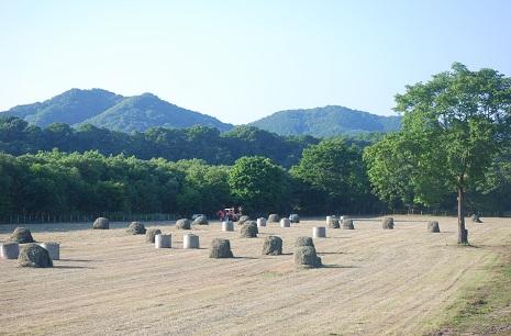 6・牡・夕暮れ牧草