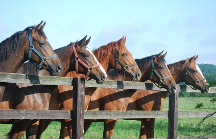朝・5頭の1歳牝馬たち
