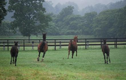 霧雨・母が先に駆ける