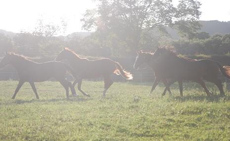 9・前日・輝く馬たち
