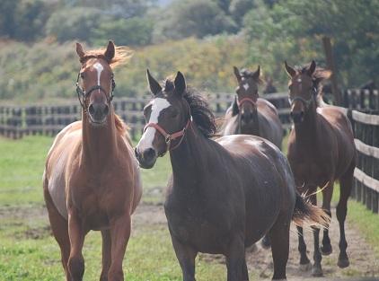 9・2頭・1歳牝馬