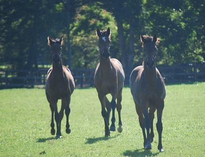 10・新・牝馬3頭