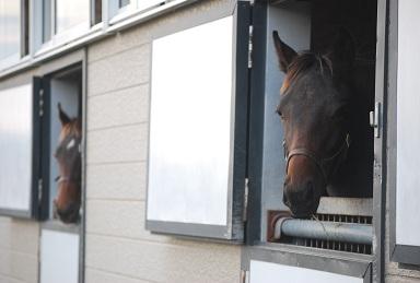 10・厩舎・キンカメ&ディープ
