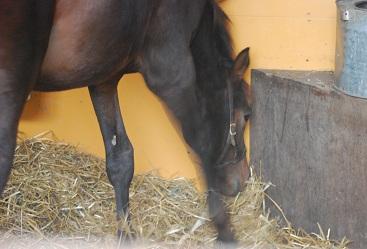 10・厩舎・キンカメ牝