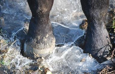 12・雪・氷を割るロブ