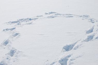 12・晴れ・雪の足跡