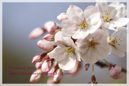 03_MG_7636-2011.jpg