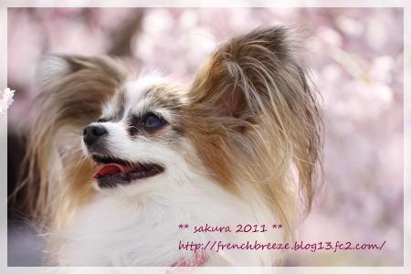 09_MG_7757-2011.jpg