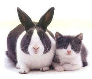 2011y02m01d_163245828_convert_20110220160930猫とウサギ