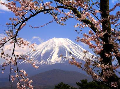 富士山桜アーチ1