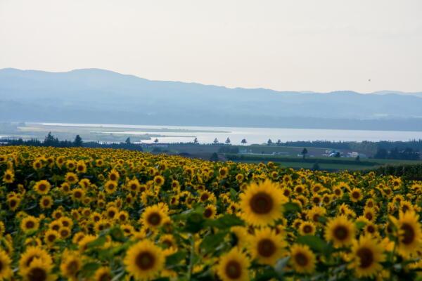 大空町女満別 朝日ヶ丘展望台付近から網走湖方向の眺め