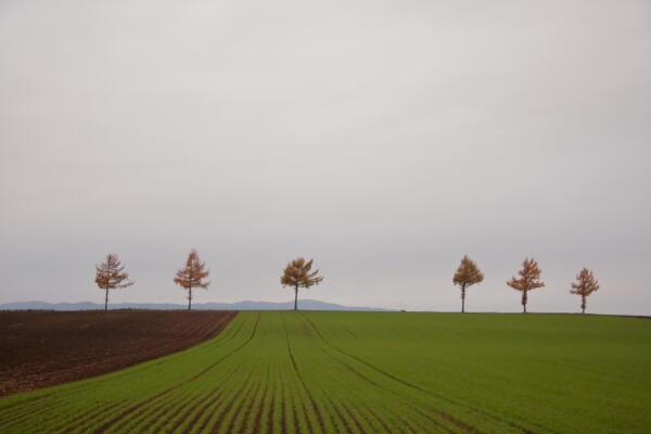 紅葉のメルヘンの丘