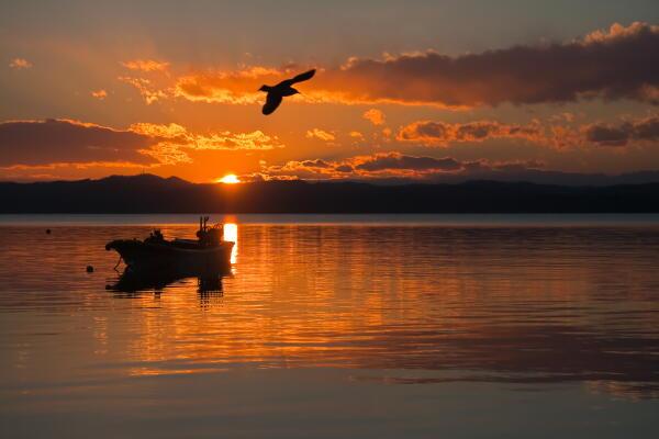 夕陽に飛ぶ