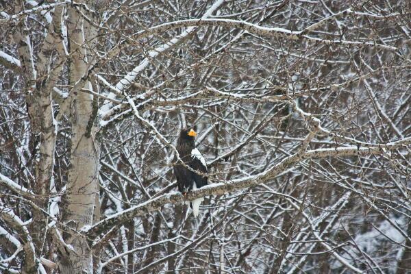 雪の積もる木に