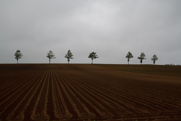 今年はジャガイモ畑です