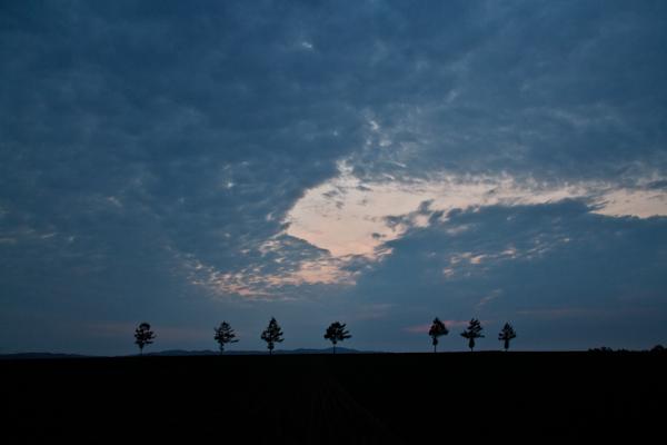 荒野ならぬ畑の7人