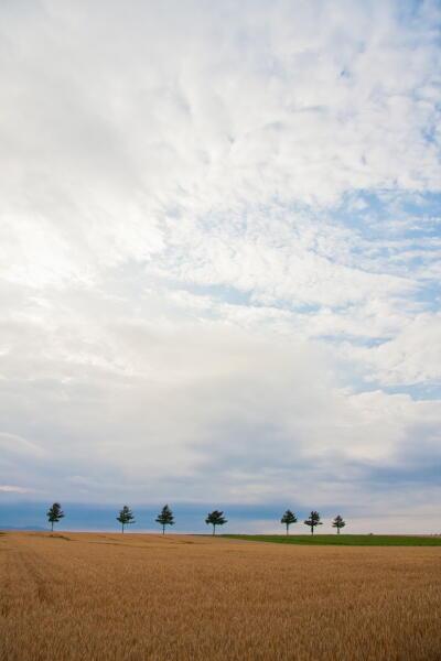 麦秋のメルヘンの丘