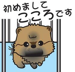 __tn_kokoro.jpg