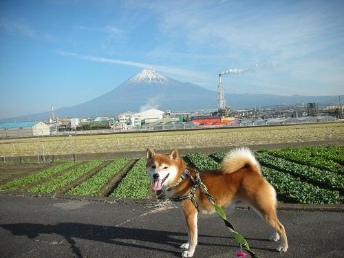 富士山はいいですねっ