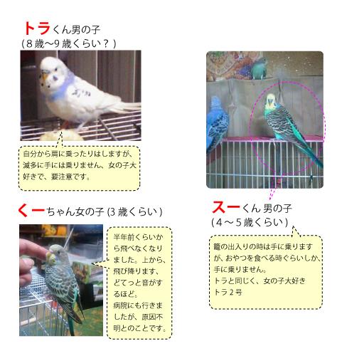 innko_20110508142619.jpg