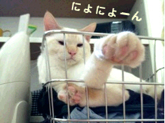moko2.jpg