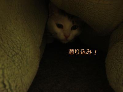 neko121217-3.jpg