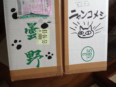 neko20121210-9.jpg
