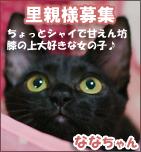 nanahachibanner