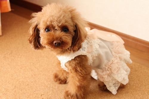 花ドレス2