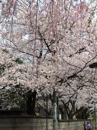 2011_0410戸田別館 0035