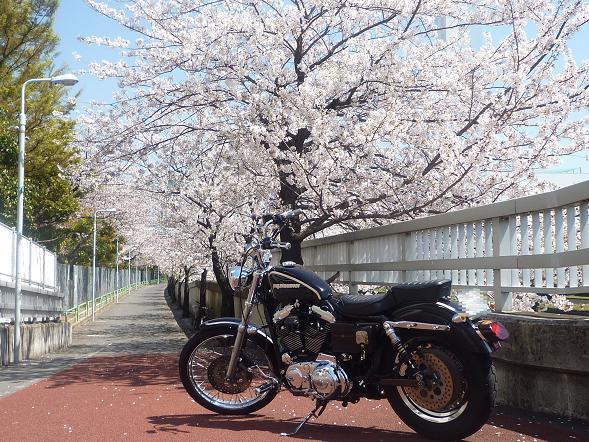 2011_0413戸田別館 0002