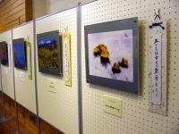 写真と俳句の親子展
