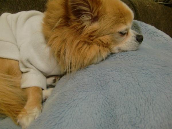 1109寒い日は毛布よね